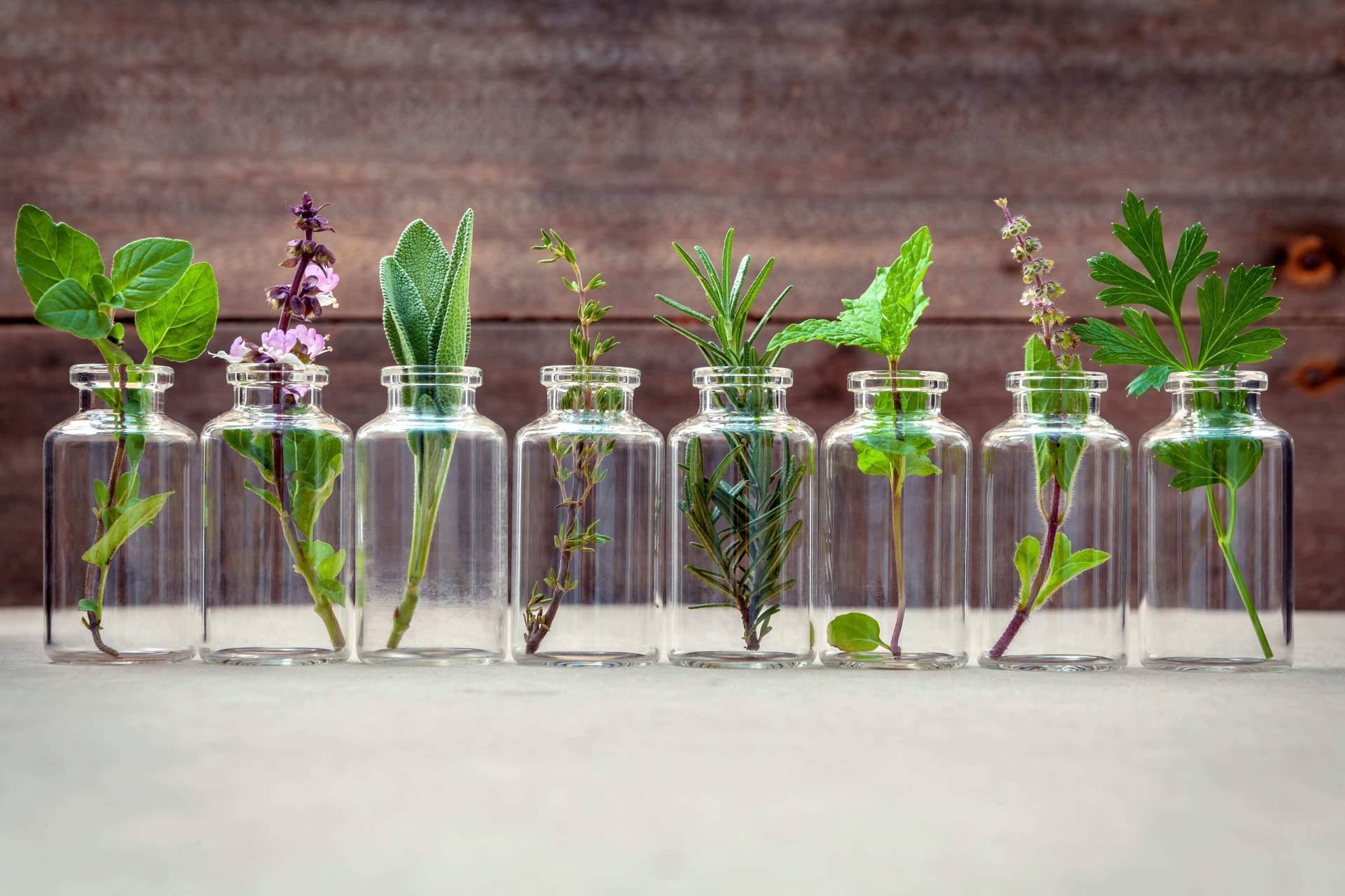 Heilkräuter der Pflanzenheilkunde