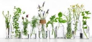 Verschiedene Heilpflanzen der Pflanzenheilkunde